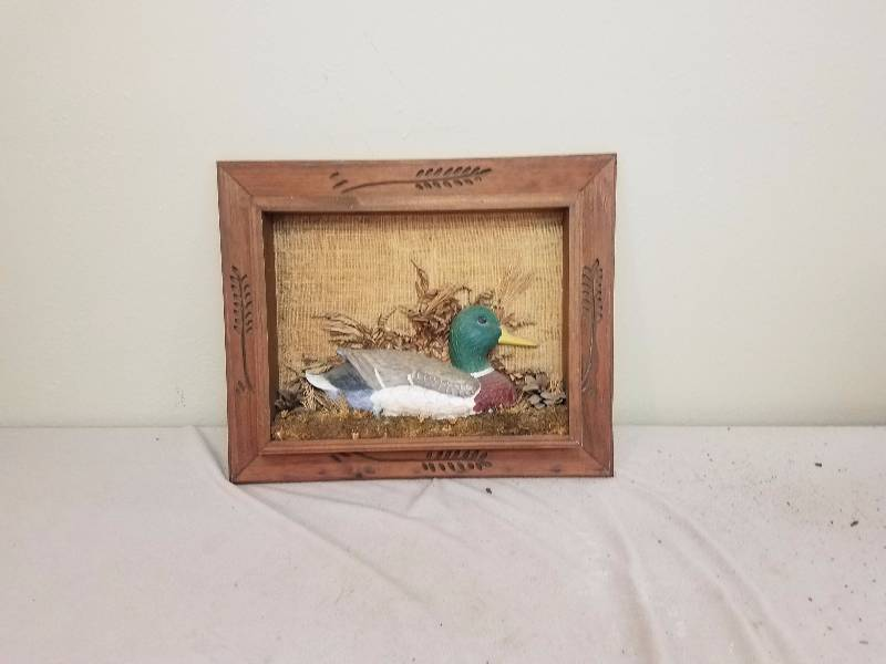Wood Duck Mallard Shadow Box Display End Of Year Personal Property Sporting Goods