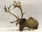 Woodland Caribou Mount