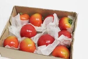 Tomatoes Decoration Box Of 10